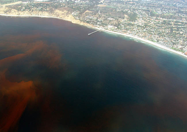 Red tide as seen from the air - this shot was taken in California