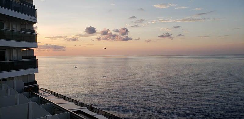 Seagulls Flying as We Sail Home on MSC Seaside